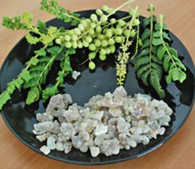 Boswellia sacra high grade frankincense