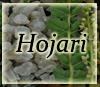 Hojari - Boswellia Sacra