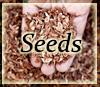 boswellia sacra seeds